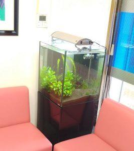 待合室に水槽を設置しています